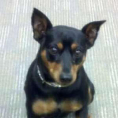 Photo of <strong>Claudia the Min Pin</strong>